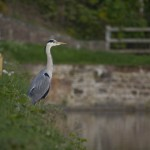heron on wall gailey