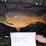 Calfheath 20lb 12oz Nov 15 (1)