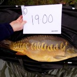 Kingswood 2nd 19lb Nov 15 (2)